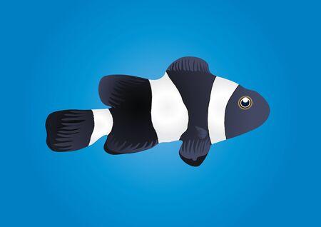 pez payaso: Ilustraci�n de pez payaso aislado sobre fondo azul     Vectores