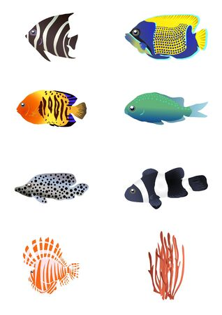 plunging: illustration of exotic fishes with coral  Illustration