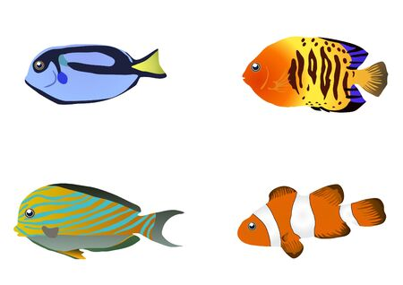 illustration of four tropical fishes