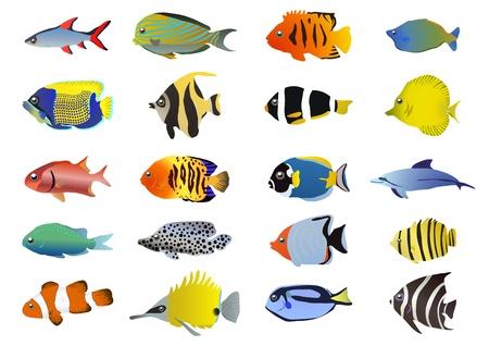 peces de acuario: Conjunto de peces tropicales, ilustraci�n Vectores