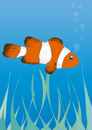 illustration of clownfish under water   Vector