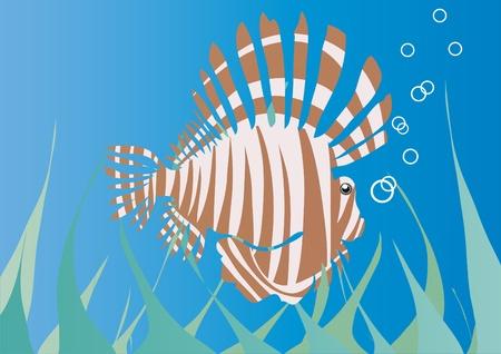 illustration of sea hedgehog under water      Vector