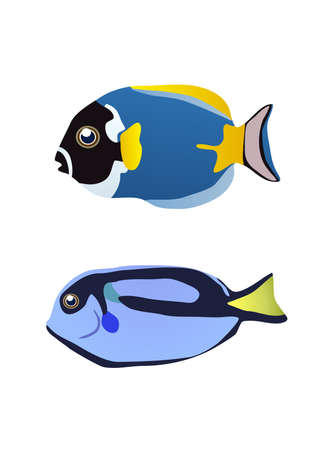 plunging: illustration of two tropical fishes on a white background