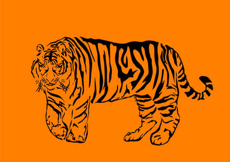 bengal: Black bengal tiger isolated on orange background, illustration