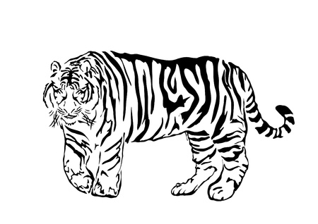 bengal: Black bengal tiger isolated on white background, illustration