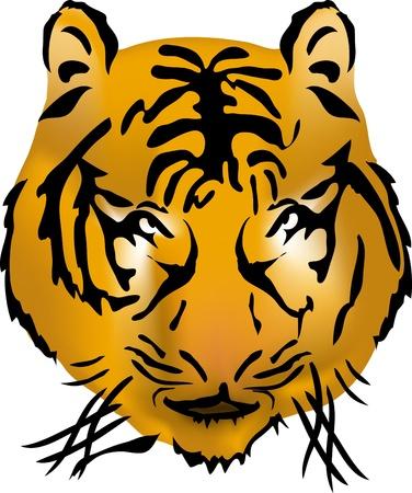 Bengal tiger head, illustration    Vector