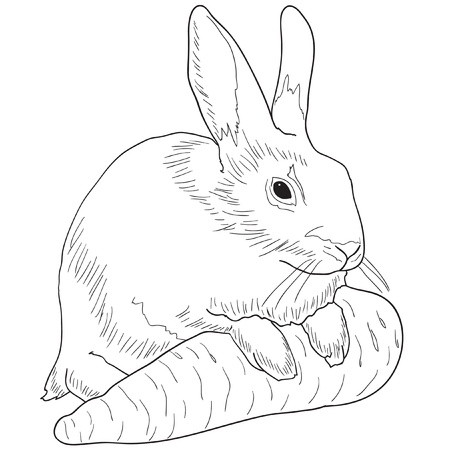 Monochrome image of a rabbit with a carrot Vector