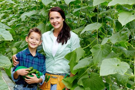 Woman and her son with crop of cucumbers in the greenhouse  photo