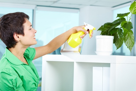 Photo of young woman spraying leaves of domestic plant photo