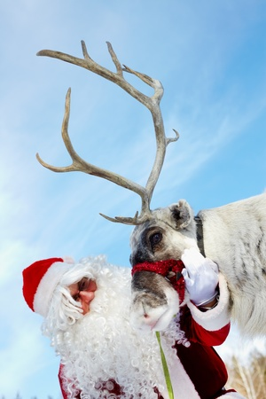 elk horn: Santa Claus stroking his reindeer  Stock Photo