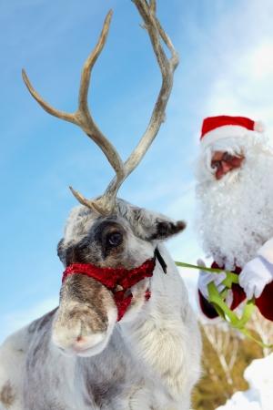 Cute reindeer and Santa Claus behind  photo