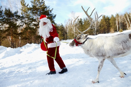 Santa Claus walking in the wood and leading his reindeer Stock Photo - 10835259