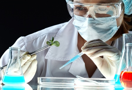 reacting: Female scientific worker observing plant reacting to the reagent  Stock Photo