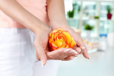 handcare: Female holding rosebud in hands with French manicure