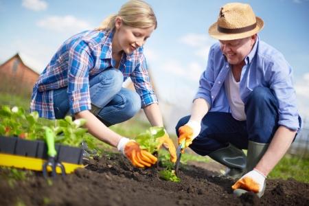 jardinero: Imagen de una pareja de agricultores brotes de plántulas en el jardín