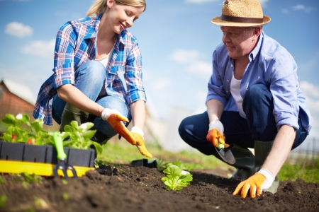 farming tools: Image of couple of farmers seedling sprouts in the garden