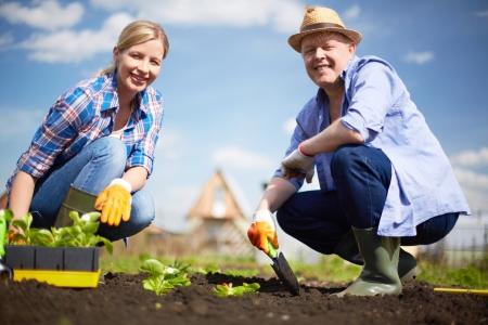 agricultor: Imagen de una pareja de agricultores brotes de pl?ntulas en el jard?n