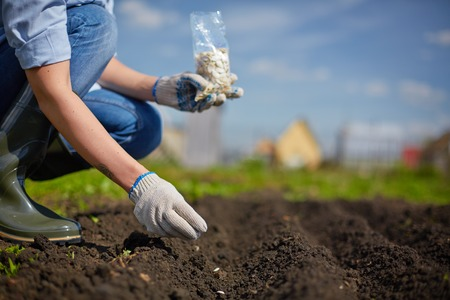 sowing: Image of female farmer sowing seed in the garden Stock Photo