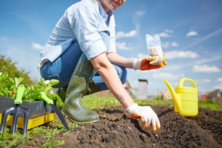 siembra: Imagen de la siembra de semillas agricultora en el jardín