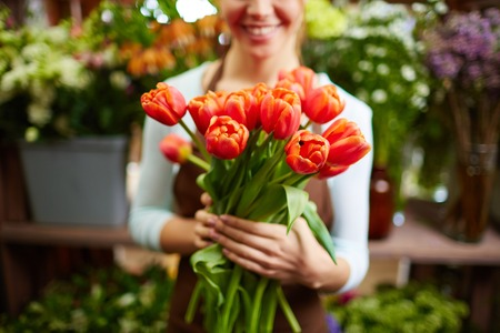 Bunch of red tulips in female hands