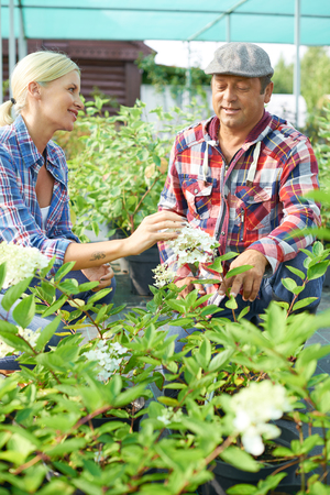 Two farmers speaking about new sort of plant in the garden photo