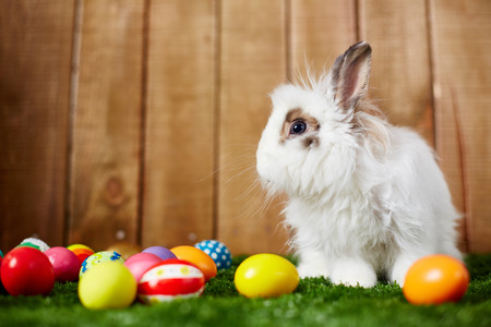 Easter eggs and a little rabbit photo