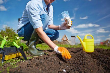 siembra: Plantación siembra Agrícola