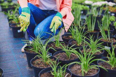 replanting: Female in gloves replanting seedlings