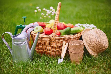 vegs: Basket with fresh vegs and gardening equipment on green grass
