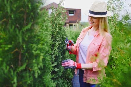 thuja: Female gardener taking care of thuja