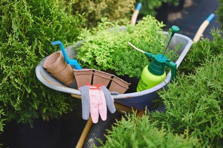 replant: Various tools and objects for gardening in wheelbarrow