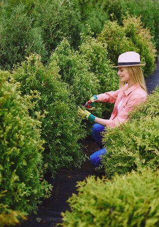 thuja: Female gardener taking care of green thuja bushes