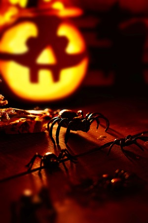 antichrist: Halloween spiders on background of jack-o-lantern