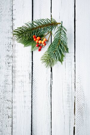 guelder: Small conifer and guelder branches over wooden background