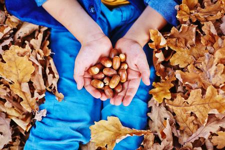 acorn nuts: Acorns on kid palms