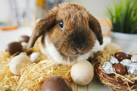 lop eared: Easter rabbit sitting by wooden and chocolate eggs Stock Photo