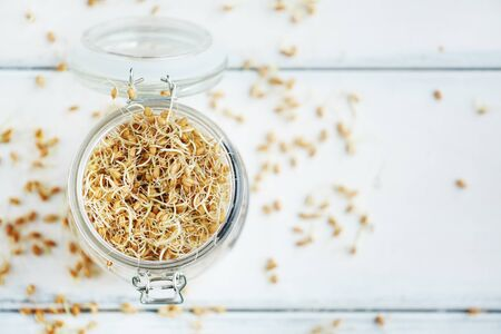 organics: Jar with germinating grains of wheat