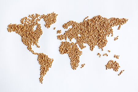 organics: Wheat grains making up continent of world map Stock Photo