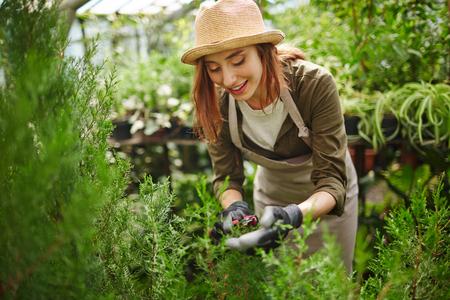 Gardener cutting plants in green-house