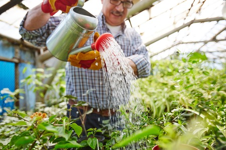 tree farming: Green-house worker watering small trees