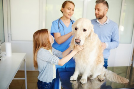 man doctor: Dog sitting on table while visiting vet clinic
