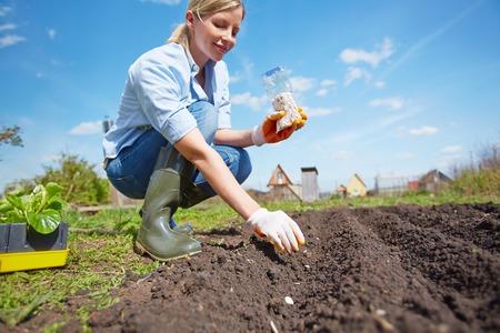 siembra: semilla femenina de siembra de los agricultores en el jardín