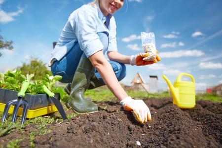 siembra: Mujer de la siembra de semillas de calabaza en el jardín