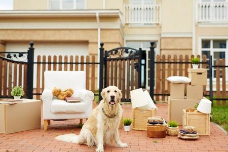 新しい家のフェンスでパックされたものの背景の上に座ってかわいいラブラドール