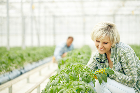 caring for: Happy female farmer caring for plants