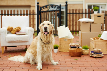 Cute pet sitting by new house with packed things on background