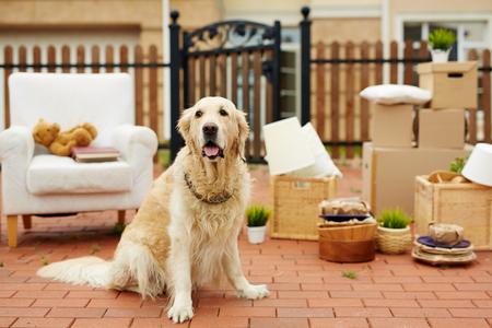 Linda de mascotas por casa nueva con cosas empaquetadas en el fondo