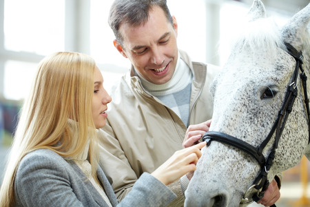 dapple grey: A man showing to his girlfriend a beautiful white horse