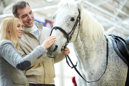 A young couple looking at a cute white horse Stock Photo