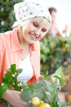 sprinkling: A woman gardener sprinkling a plant